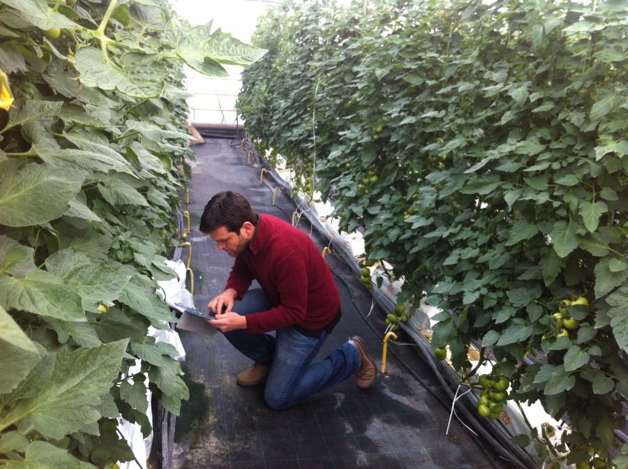 Uno de los investigadores en el invernadero