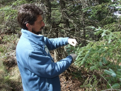 Coniferous forests investigation in southern Spain to reduce their vulnerability to climate change