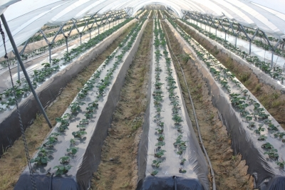 Image of the experimental farm in Huelva
