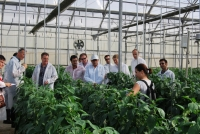 Members of The European Innovation Partnership (EIP) Focus Group for the Improvement of Efficiency in the Use of Fertilizers in Horticultural Crops visit the UAL-ANECOOP Experiment Farm